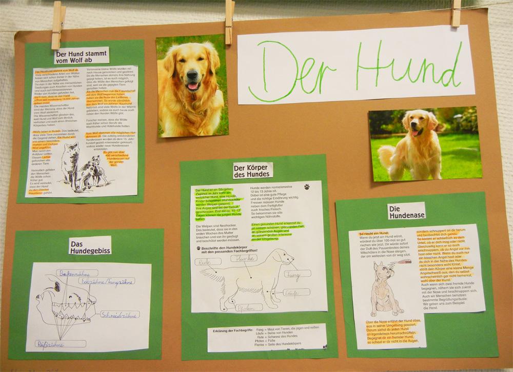Referat Hund 5 Klasse